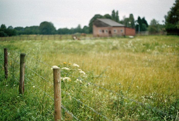 Cierra Henderson [.nl]    Film Photography